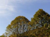 Träd på en härlig solig dag royaltyfri foto