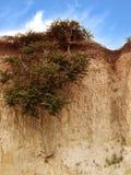 Träd på en klippa arkivfoton