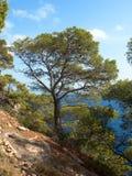Träd på en klippa Royaltyfria Bilder