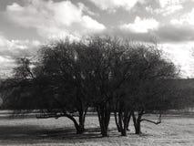 Träd på en kulle med inga sidor Arkivfoto