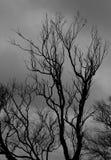 Träd på en molnig dag - Monokrom-lodlinje Arkivbild