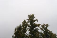 Träd på en regnig dag Arkivbilder