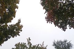 Träd på en regnig dag Royaltyfria Foton
