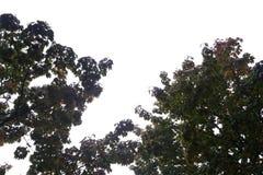 Träd på en regnig dag Arkivfoto