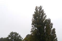 Träd på en regnig dag Arkivbild