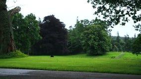 Träd på en regnig dag i Skottland stock video