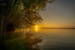 Träd på en sjö Royaltyfria Foton