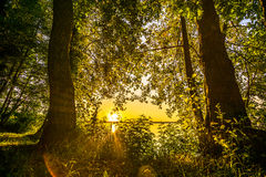 Träd på en sjö Arkivfoton
