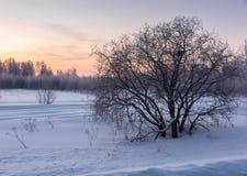 Träd på en snöig glänta på soluppgång royaltyfri foto