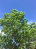 Träd på en solig dag i en liten stad i lantlig North Dakota sommar Royaltyfria Bilder