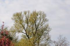 Träd på en vårdag Royaltyfri Fotografi