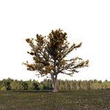 Träd på enormt fält royaltyfri illustrationer