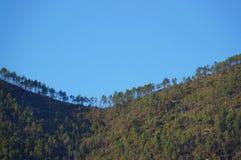 Träd på ett bergmaximum Arkivfoto