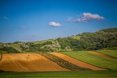 Träd på ett grönt fält Fotografering för Bildbyråer