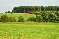Träd på ett grönt fält Royaltyfri Bild