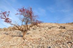 Träd på ett stenigt område Royaltyfria Foton