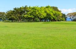 Träd på fält för grönt gräs Royaltyfria Bilder