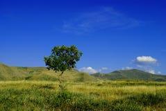 Träd på fältet royaltyfria foton