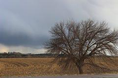 Träd på fältet av havre i höst Arkivfoton