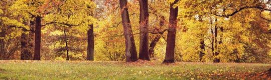 Träd på fältet i höst royaltyfria bilder