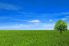 Träd på fältet under den blåa himlen arkivbild