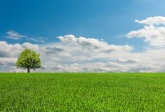 Träd på fältet under den blåa himlen med moln arkivbild