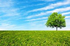 Träd på fältet under den blåa himlen med moln arkivfoton