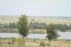 Träd på flodbanken arkivbild