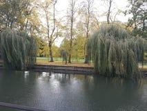 Träd på floden Arkivbilder