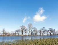Träd på flodslättar av flodijssel nära Zalk mellan Kampen och Zwolle i Nederländerna Arkivfoto