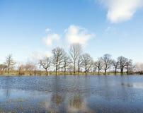 Träd på flodslättar av flodijssel nära Zalk mellan Kampen och Zwolle i Nederländerna Royaltyfri Foto