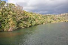 Träd på flodstranden Royaltyfria Foton