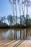 Träd på flodstrandrollbesättningskuggor på en klara Sunny Day Royaltyfri Bild