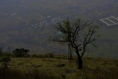 Träd på glidbanan arkivfoto