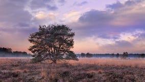 Träd på höstsolnedgången med dramatisk himmel på hed-land, Goirle, Nederländerna royaltyfria bilder