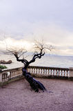 träd på havssolnedgången Arkivbild