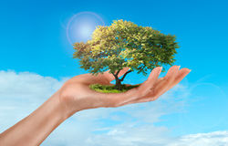 Träd på himmelbakgrund Arkivbild
