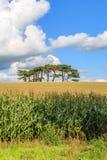 Träd på horisonten Royaltyfri Fotografi