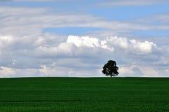 Träd på horisonten Arkivfoto