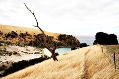 Träd på känguruön Arkivbild