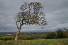 Träd på kanten av Dartmoor Arkivfoto