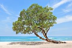 Träd på krökningen för havssida över till sanden arkivbilder