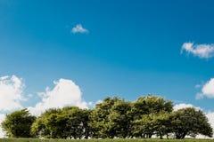 Träd på kullen med blå himmel och moln på en solig dag arkivbild