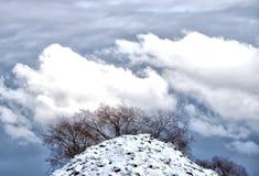 Träd på kullen och den blåa himlen Royaltyfri Bild