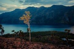 Träd på kullen på solnedgången över en fjärd Fotografering för Bildbyråer