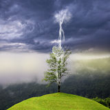 Träd på kullen som slås av blixt Royaltyfri Fotografi