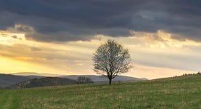 Träd på kullen under solnedgång fotografering för bildbyråer