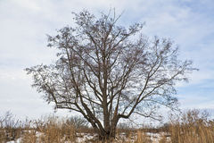 Träd på kusten Royaltyfri Foto