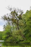 Träd på kusten av dammet i parkerar nära den Nymphenburg slotten i Munich i Bayern royaltyfri fotografi