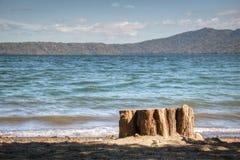 Träd på kusten av sjön Apoyo nära Granada, Nicaragua Arkivbild